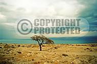 Dead Sea 017