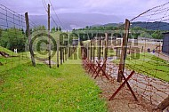 Natzweiler-Struthof Barbed Wire Fences 0002