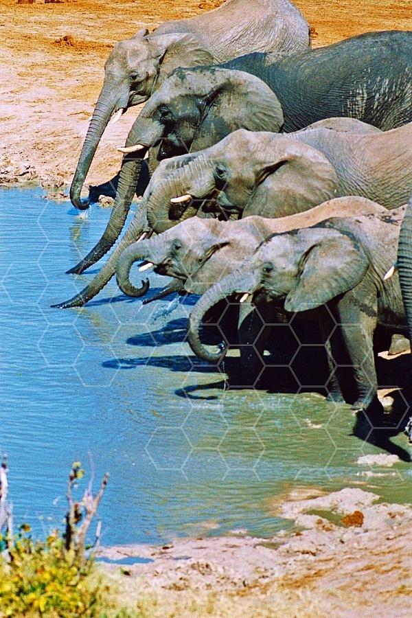 Elephant 0082