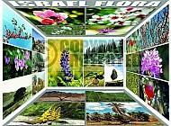 Israel Flora 001