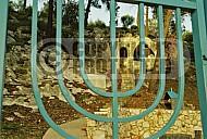 Rebbe Kruspidi The Amora 0002