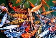 Fish 0005