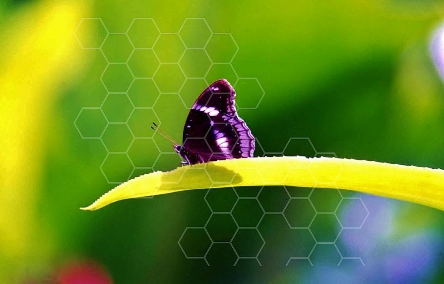 Butterfly 0048