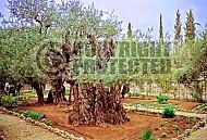 Jerusalem Gethsemani 002