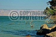Sea of Galilee Kinneret 0002