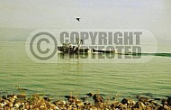 Sea of Galilee Kinneret 0025