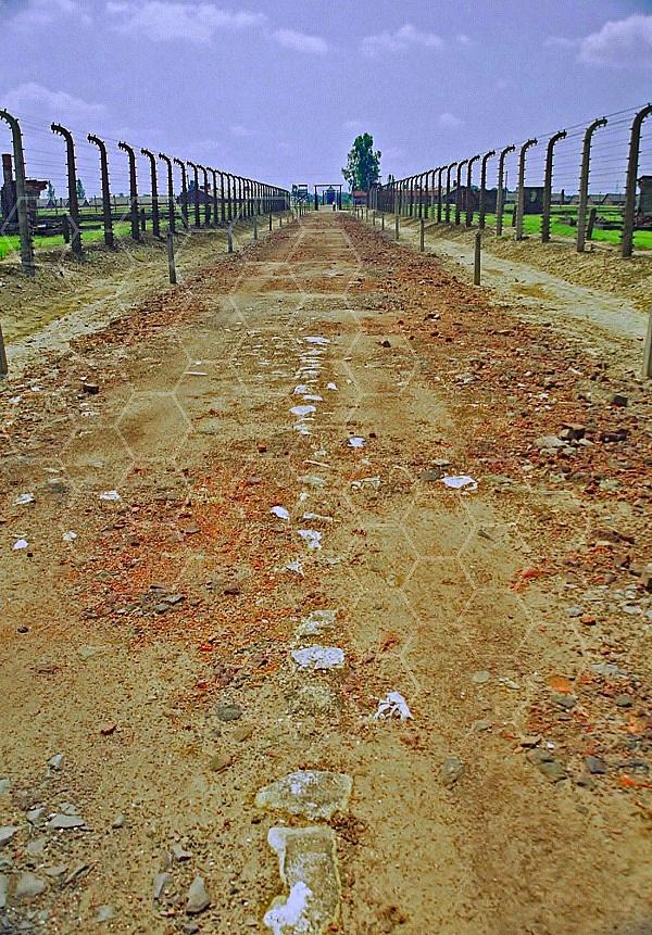 Birkenau Death Route 0011