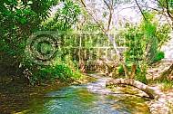 Dan River 004
