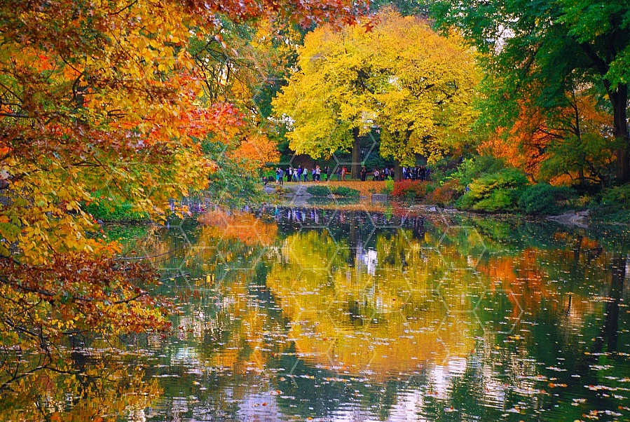 Foliage New York City Central Park 005
