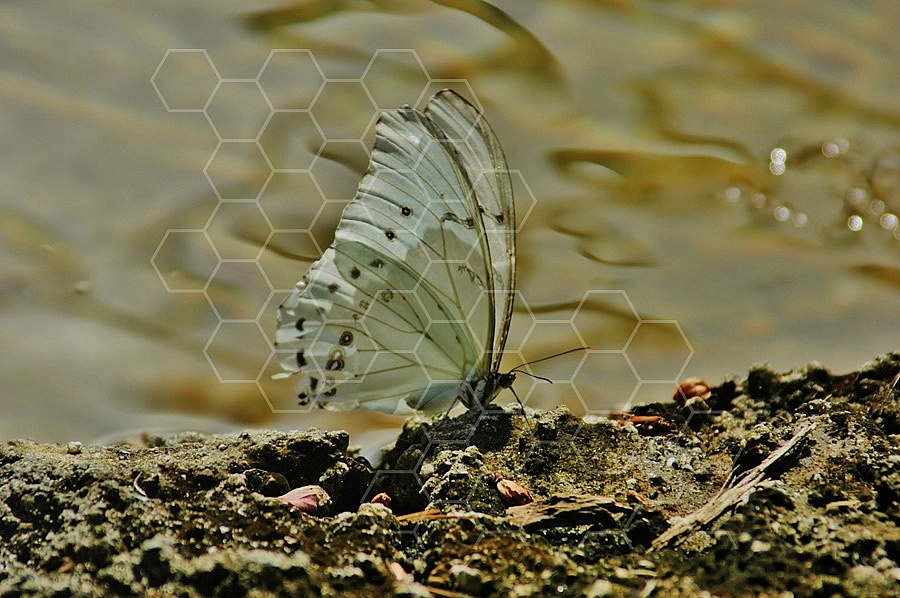 Butterfly 0016