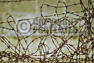 Sachsenhausen Barbed Wired Fence 0001