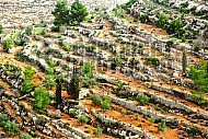 Judaean Hills 011