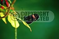 Butterfly 0035