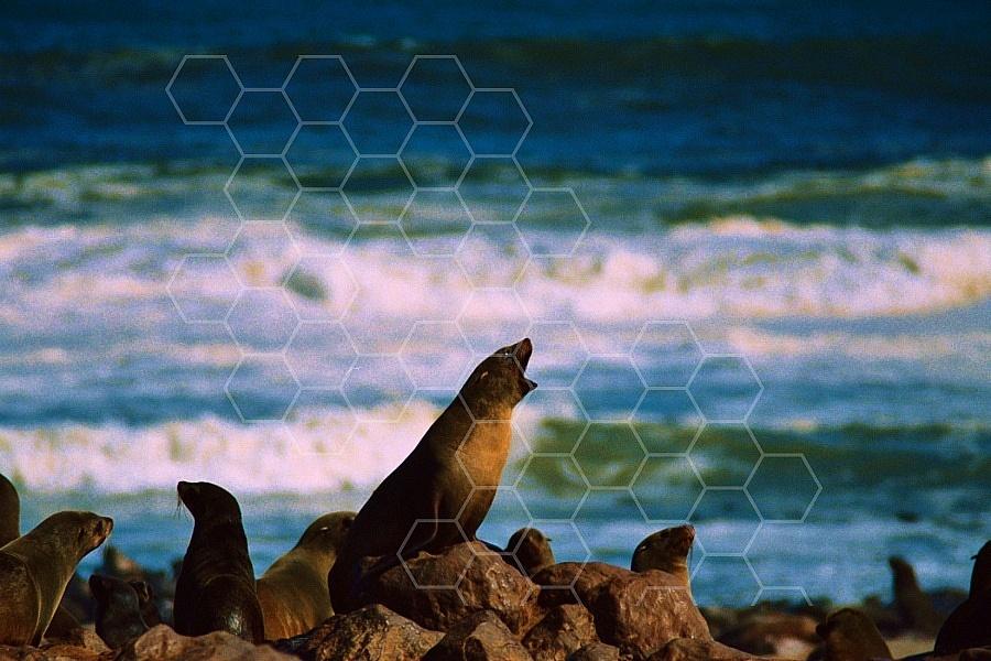Seal Fish 0005