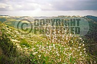 Judaean Hills 002