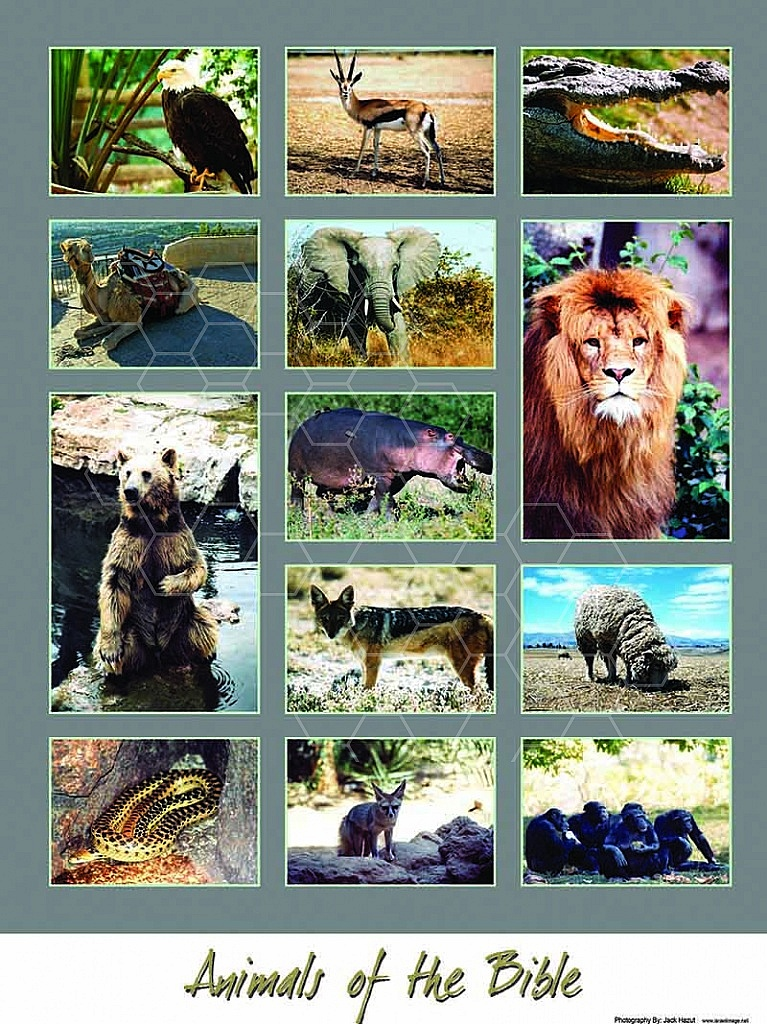 The Animals Of The Bible 002