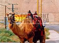 Camel 0021