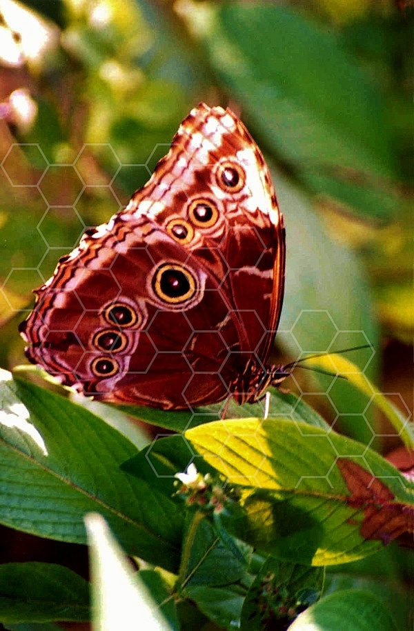 Butterfly 0058