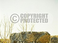 Kfar Nachum - Capernaum 017