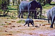 Elephant 0078