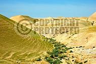 Judean Desert 022
