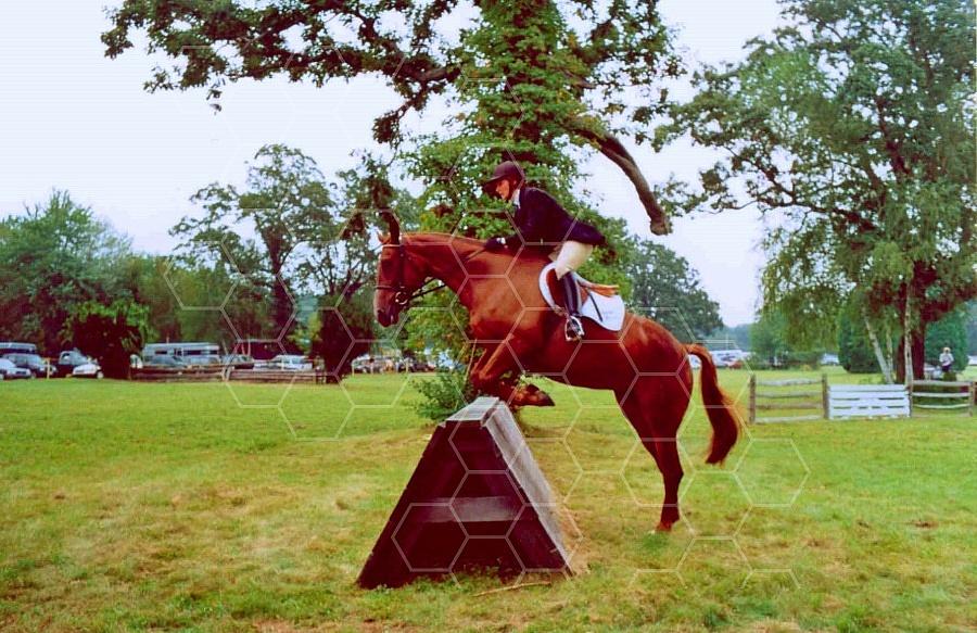 Horse 0014