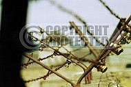 Mauthausen Barbed Wire Fence 0002