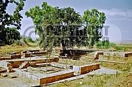 Tel Dan Altar 006