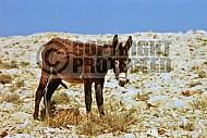 Donkey 0004