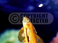 Fish 0009