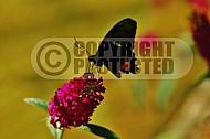 Butterfly 0034
