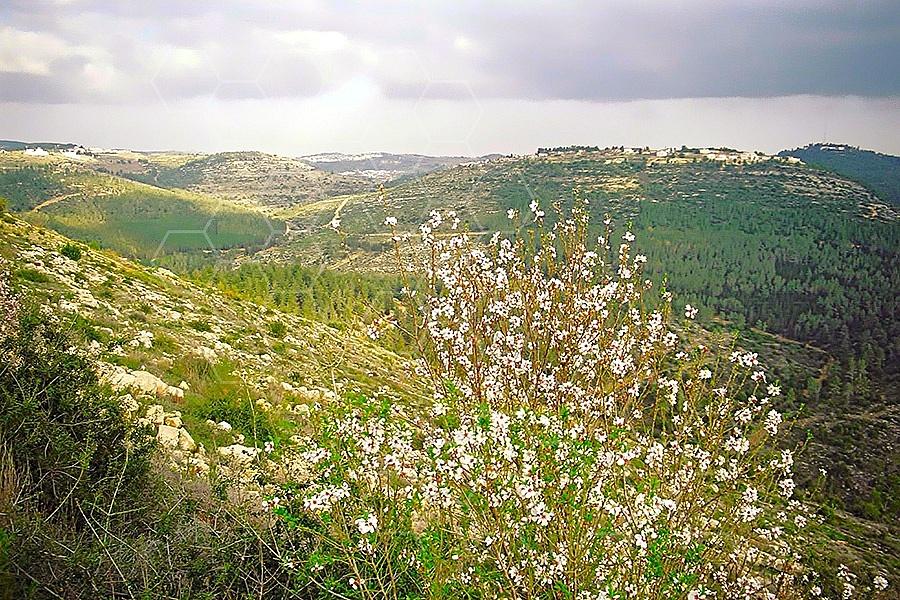 Judean Hills 013