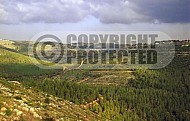 Judaean Hills 0020