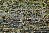 Treblinka Ashes Memorial 0005