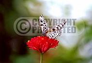 Butterfly 0045