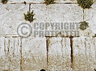 Kotel Man Praying 040