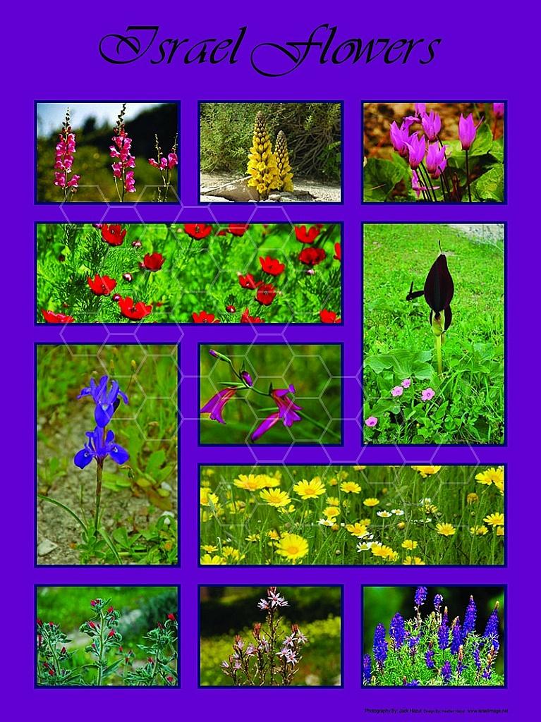Israel Flowers 008