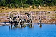 Elephant 0027