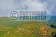 Judaean Hills 003