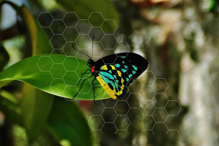 Butterfly 0029