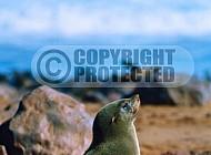 Seal Fish 0019