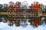 Foliage Washington Dc 009