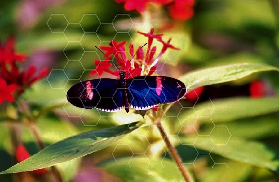 Butterfly 0057