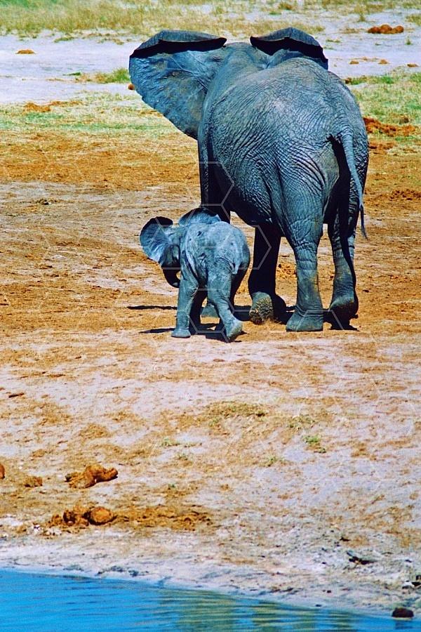 Elephant 0087