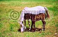 Horse 0003
