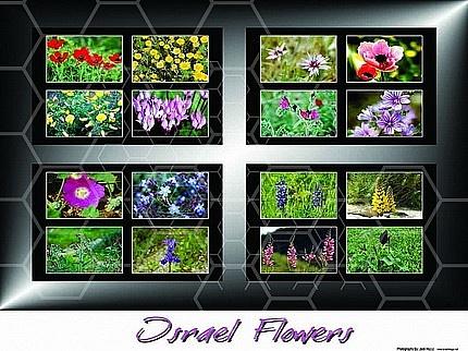 Israel Flora 002
