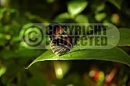 Butterfly 0039