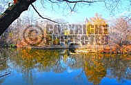Foliage New York City Central Park 015