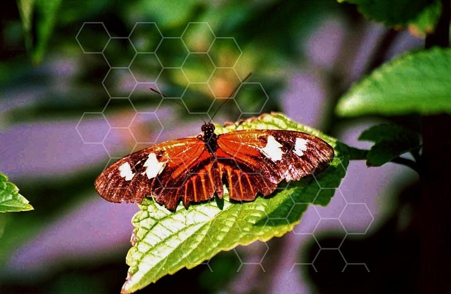 Butterfly 0056