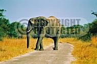 Elephant 0003
